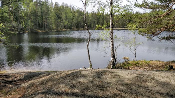 Uintireissu: Metsälampi